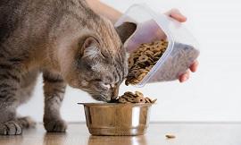 Чем кормить кошку: правила выбора корма