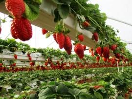 Советы по выращиванию клубники на собственном участке: как получить богатый урожай